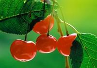 Сколько варить вишневый джем